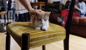 بريطانيا : افتتاح أول مطعم ومقهى للقطط في البلاد