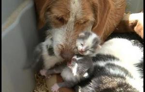 العراق : كلبة تلد ثلاث قطط في واحدة من أغرب حوادث العالم