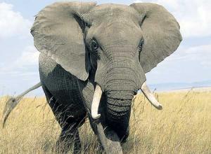سجن حراس فيل يتيم بسبب القصوة المفرطة معه مما أدي لمقتله