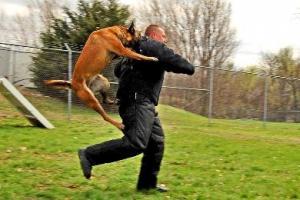 أمريكي يعض كلب في أذنه ويمزّقها للهروب منه
