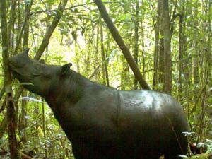 فريق علمي يكتشف ظهور حيوان منقرض في سومطرة