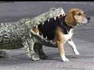 مسن أمريكي يصارع تمساح ﻷنقاذ كلبته