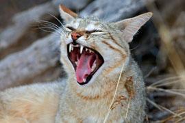 قطة تتسبب في مقتل شاب جزائري