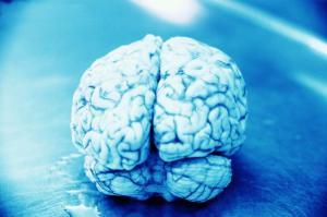 دراسة: البشر يزدادون غباءً بصورة تدريجية عبر الزمن