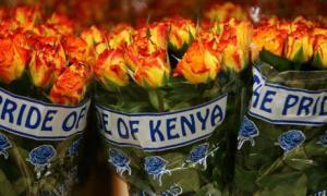 ألمانيا تستورد مئات اﻷطنان من الزهور للأحتفال بعيد الحب