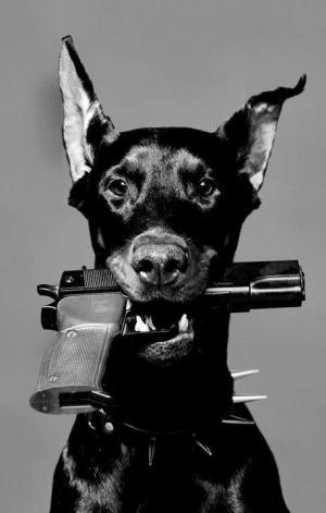 كلب يطلق النار على صاحبه