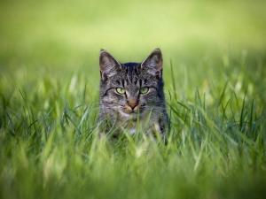 سيدة تقتل زوجها دفاعاً عن قطة