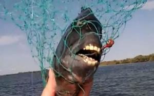 صياد هاوي يكتشف نوع جديد من اﻷسماك لها أسنان تشبه البشر