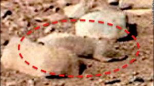 ألتقاط صورة لحيوان علي سطح كوكب المريخ