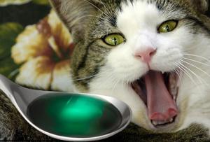 سجن بريطاني أرغم قطة على تعاطي المخدرات