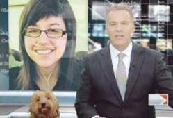 كلب يقتحم أستوديو ويظهر بجوار مذيع في نشرة اﻷخبار