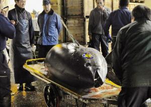 اليابان : بيع سمكة تونة حمراء بما يزيد عن 150 ألف دولار