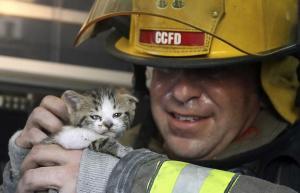 بريطانيا : قطة تنقذ صاحبها من حريق وتساعد رجل الإطفاء