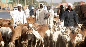 السودان : أكثر من 100 قتيل في هجوم لسرقة ماشية وأغنام
