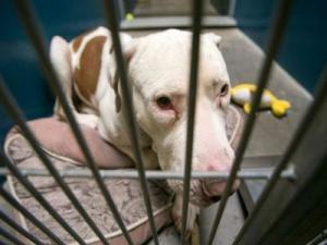 محكمة أمريكية تحكم علي كلب بالسجن المؤبد
