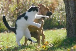 قطة تنقذ طفل من هجوم كلب مسعور