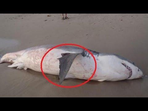 وفاة سمكة قرش اختناقًا بعد ابتلاعها أسدًا