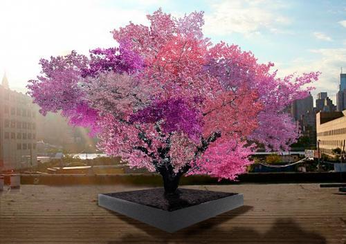 مشروع لنشر زراعة أغرب شجرة مثمرة  في العالم تنتج أنواع فاكهة مختلفة في نفس الوقت