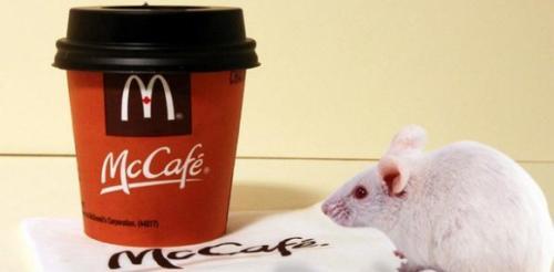 رجل يعثر علي فأر داخل كوب قهوة من ماكدونالدز