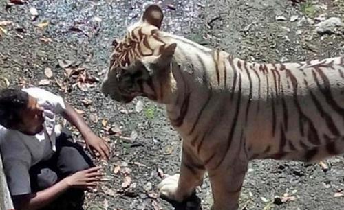 الهند : نمر يقتل شاب في حديقة الحيوانات بنيودلهي