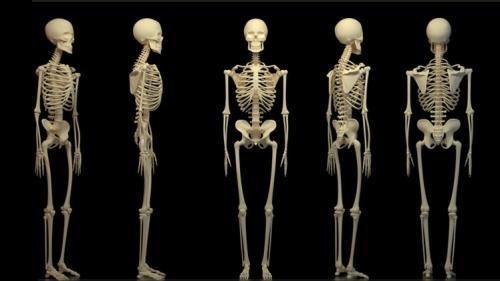 دراسة : الإنسان فقد الكثير من عظامه نتيجة نمط الحياة العصري