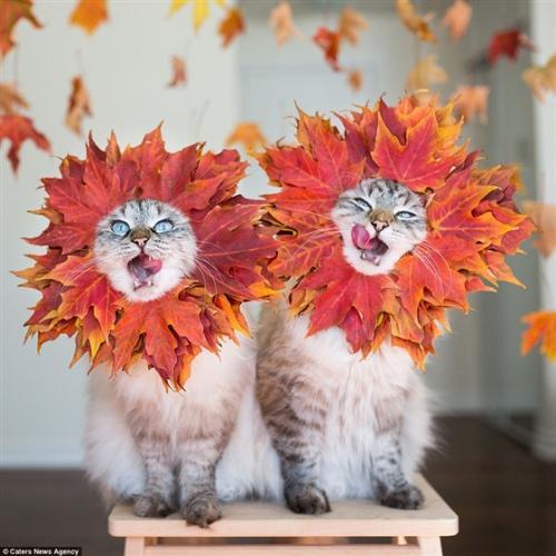 قطتين يتحولوا إلي نجوم علي موقع إنستجرام بسبب أزيائهم المميزة