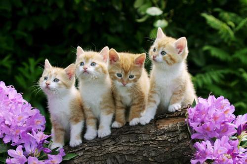 قصة القطط والتونة ستغير نظرتك لأشياء كثرة