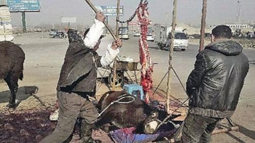 تعذيب الحمير قبل ذبحها وبيعها للاحتفال برأس السنة الصينية