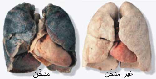 تعرف علي أفضل اﻷطعمة لأزالة أثار التدخين في الجسم