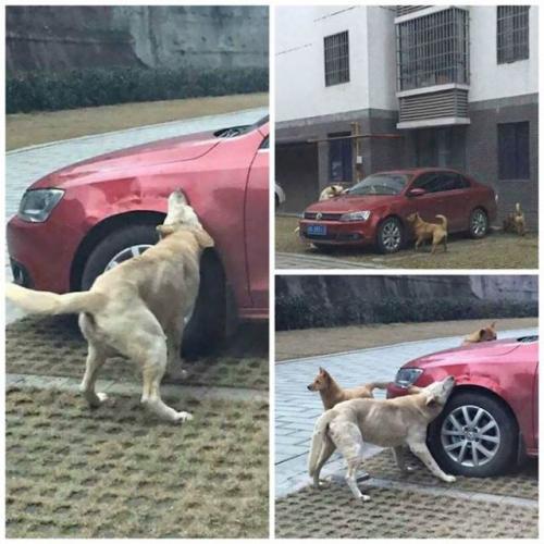 كلب يبتكر طريقة غريبة وذكية للإنتقام من رجل أعتدي عليه