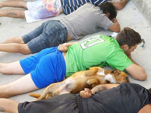 البرازيل : كلب عصابة لتجارة المخدرات يبهر الشرطة والعالم