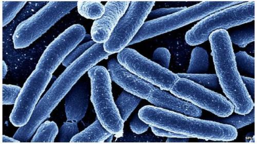 علماء يحذروا من مرض ميكروبي جديد قد يتسبب بوفات الألاف
