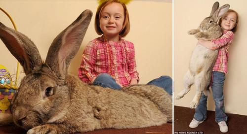 أكبر أرنب في العالم يحطم اﻷرقام القياسية وطعامه يكلف مالكه آلاف الدولارات