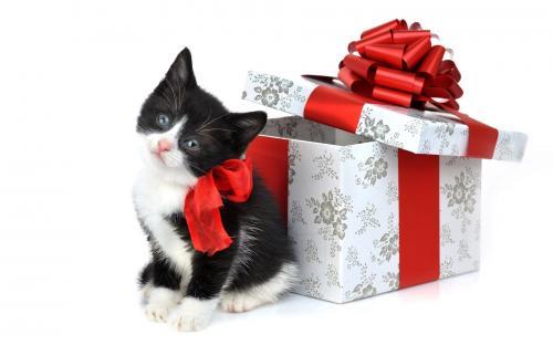 بنك روسي يقدم قطة هدية لكل عميل يحصل علي قرض
