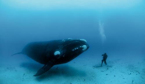 هل يعيش الإنسان  200 سنة بجينات الحوت ؟