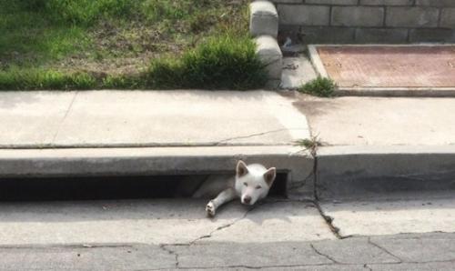 الشرطة تنقذ كلبة عالقة بفضل شريحة ذكية