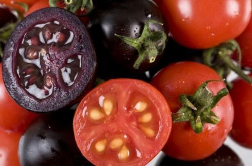 الطماطم المعدلة وراثيا تقاوم مرض الايدز