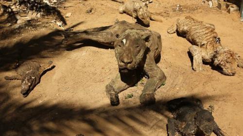 أسوأ حديقة حيوان في العالم في غزة