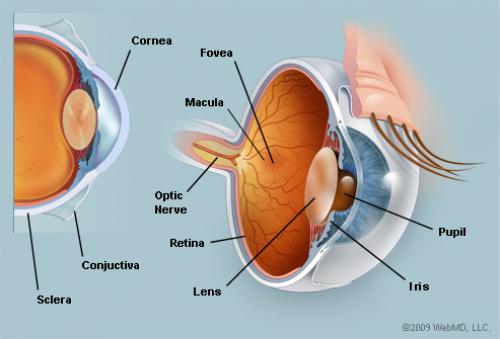 الرياضة تحمي العيون من أخطر 3 أمراض
