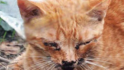 المغرب : تقديم رعاية طبية فائقة لقط تعرض للتغذيب