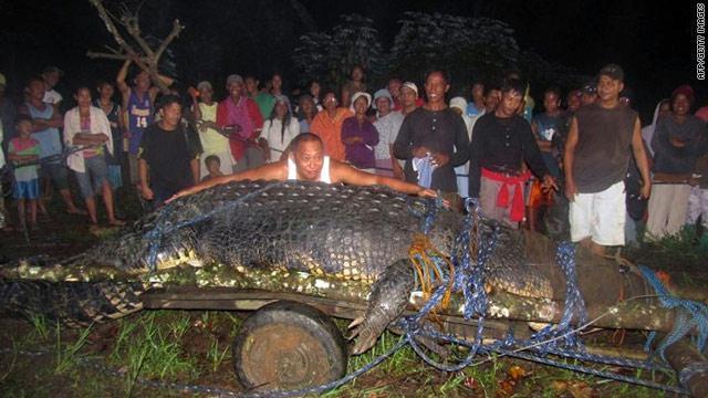 تمساح فلبيني يحصل علي لقب أكبر تمساح في العالم