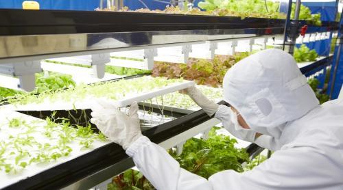 توشيبا تحوّل أحد مصانعها المهجورة إلى مزرعة المستقبل