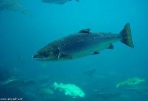 شخصية السمكة تحدد مكان تواجدها و كيفية اصطياده