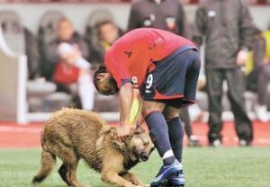 كلب يوقف مباراة في الدوري البرازيلي