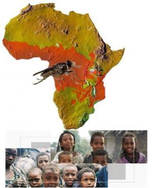مرض النوم قد يهدد 77 مليون شخص في أفريقيا