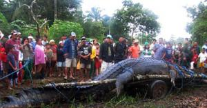 أكبر تمساح في العالم  هو تمساح الفلبين