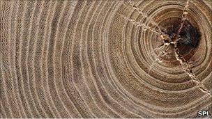 جذوع الشجر تحكي قصة حضارات البشر