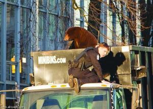 العثور علي دب في شاحنة وسط أحدي المدن الكندية