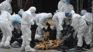 هونغ كونغ: ظهور أنفلونزا الطيور  والسلطات تعدم 17 ألف دجاجة